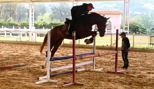 caballos argentinos hipica versailles calera